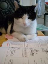 Il mio gatto Teo partecipa attivamente alle lezioni..... Anche troppo, in alcuni casi!!!